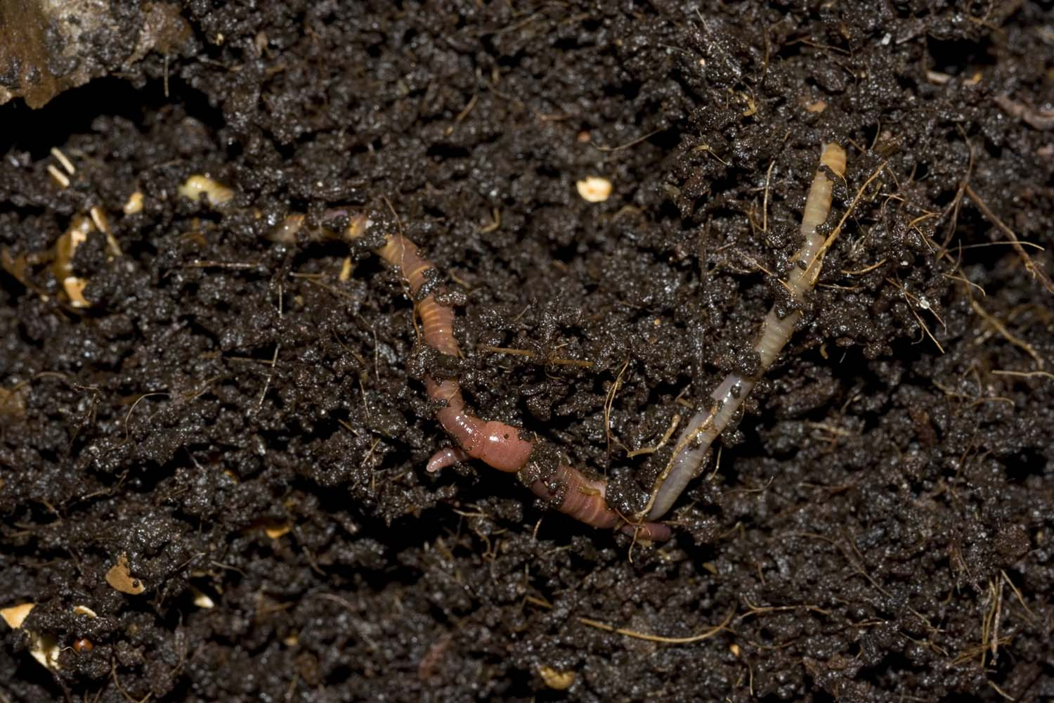 Worms and worm farming ramblers rest living lightly for Uses of soil in daily life