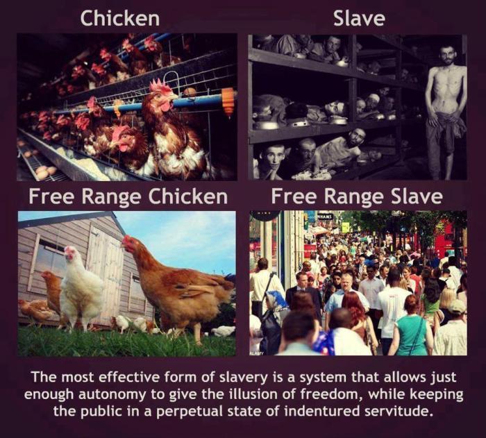 freerangeslaves