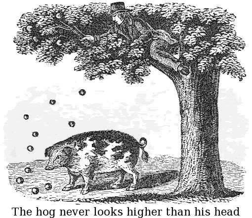 the_hog_never_looks_higher_than_his_head