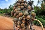 Hussling Pineapples - Tepache